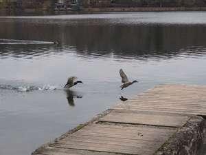 Frühling am Weßlinger See